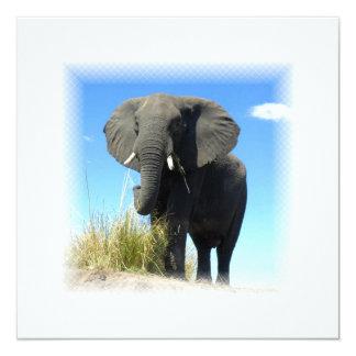 African Elephant Invitation