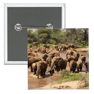 African Elephant, Loxodonta africana, crossing Button