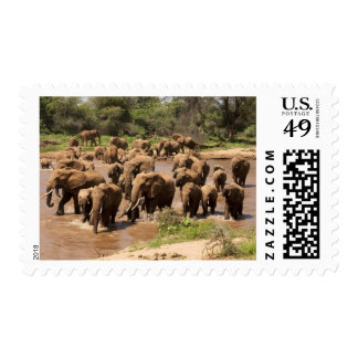 African Elephant, Loxodonta africana, crossing Postage Stamp