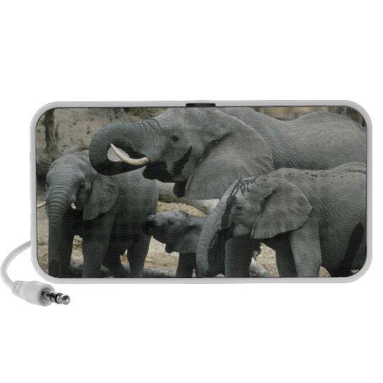 African Elephant, (Loxodonta africana), drinking Portable Speaker