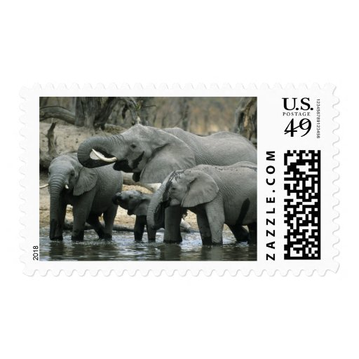 African Elephant, (Loxodonta africana), drinking Postage