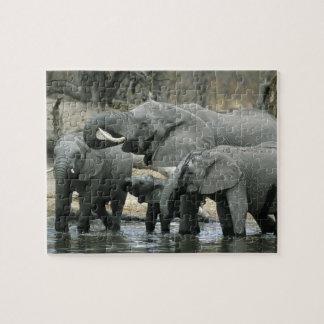 African Elephant, (Loxodonta africana), drinking Puzzle