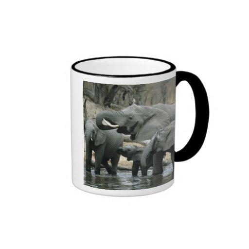 African Elephant, (Loxodonta africana), drinking Ringer Coffee Mug
