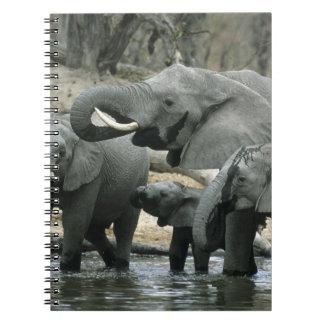 African Elephant, (Loxodonta africana), drinking Spiral Notebook