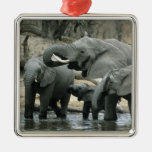 African Elephant, (Loxodonta africana), drinking Square Metal Christmas Ornament