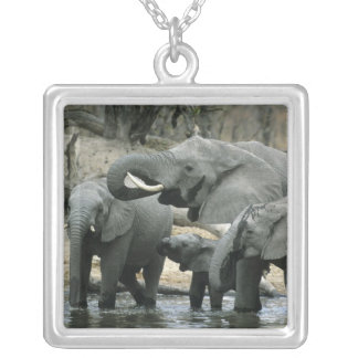 African Elephant, (Loxodonta africana), drinking Square Pendant Necklace