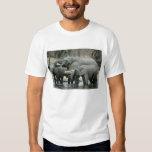 African Elephant, (Loxodonta africana), drinking T-shirts