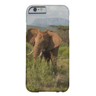 African Elephant, Loxodonta africana, in Samburu Barely There iPhone 6 Case