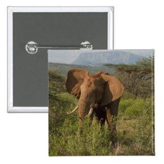 African Elephant, Loxodonta africana, in Samburu Button