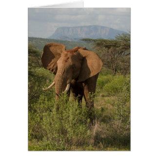 African Elephant, Loxodonta africana, in Samburu Card