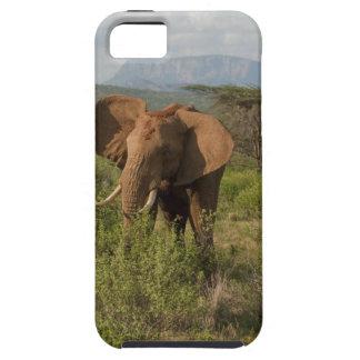 African Elephant, Loxodonta africana, in Samburu iPhone 5 Cases
