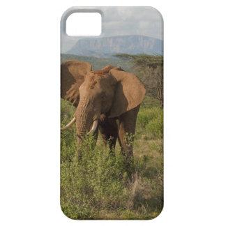 African Elephant, Loxodonta africana, in Samburu iPhone 5 Cover