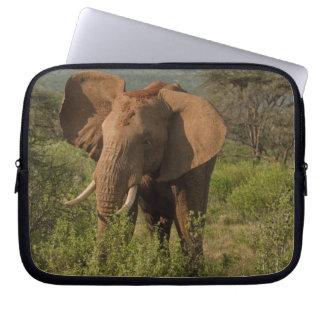 African Elephant, Loxodonta africana, in Samburu Computer Sleeve