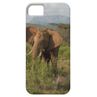 African Elephant, Loxodonta africana, in Samburu iPhone SE/5/5s Case