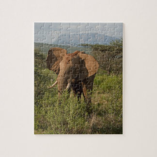 African Elephant, Loxodonta africana, in Samburu Jigsaw Puzzle