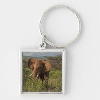African Elephant, Loxodonta africana, in Samburu Keychain