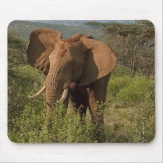 African Elephant, Loxodonta africana, in Samburu Mouse Pad