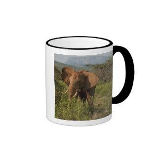 African Elephant, Loxodonta africana, in Samburu Mugs