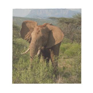 African Elephant, Loxodonta africana, in Samburu Notepad