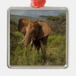 African Elephant, Loxodonta africana, in Samburu Christmas Tree Ornaments