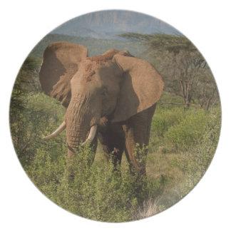 African Elephant, Loxodonta africana, in Samburu Plate