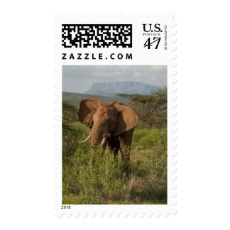 African Elephant, Loxodonta africana, in Samburu Postage