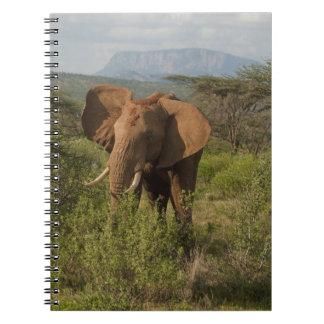 African Elephant, Loxodonta africana, in Samburu Spiral Notebook