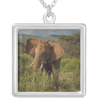 African Elephant, Loxodonta africana, in Samburu Square Pendant Necklace