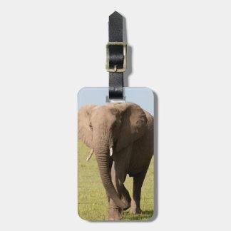 African Elephant (Loxodonta Africana), Maasai Bag Tag
