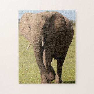 African Elephant (Loxodonta Africana), Maasai Puzzles