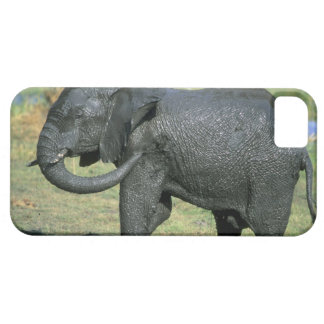 African Elephant, (Loxodonta africana), mud iPhone SE/5/5s Case