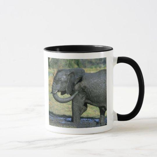 African Elephant, (Loxodonta africana), mud Mug