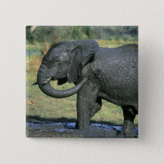 African Elephant, (Loxodonta africana), mud Pinback Button