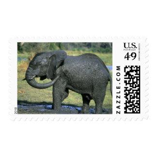 African Elephant, (Loxodonta africana), mud Postage