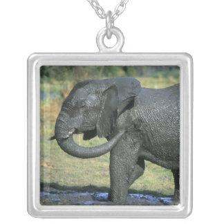 African Elephant, (Loxodonta africana), mud Square Pendant Necklace