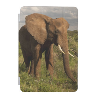 African Elephant, Loxodonta africana, out in a iPad Mini Cover