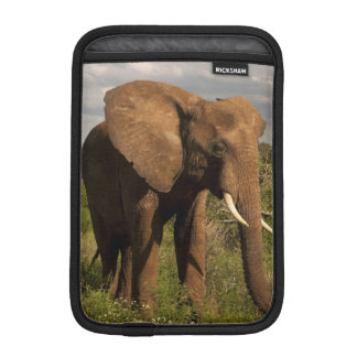 African Elephant, Loxodonta africana, out in a iPad Mini Sleeves