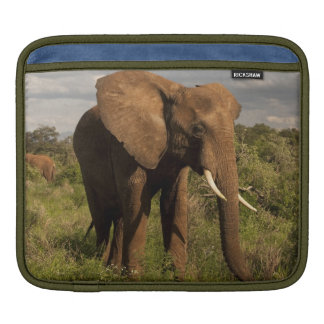 African Elephant, Loxodonta africana, out in a iPad Sleeves