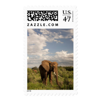 African Elephant, Loxodonta africana, out in a Postage