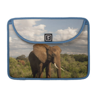 African Elephant, Loxodonta africana, out in a Sleeve For MacBooks