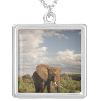 African Elephant, Loxodonta africana, out in a Square Pendant Necklace