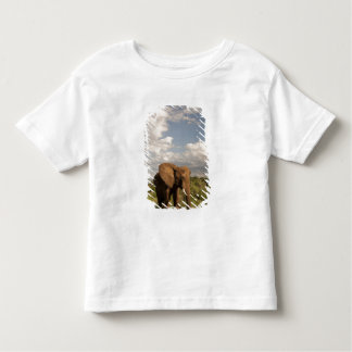 African Elephant, Loxodonta africana, out in a T Shirt