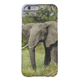 African Elephant, Masai Mara, Kenya. Loxodonta Barely There iPhone 6 Case