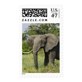 African Elephant, Masai Mara, Kenya. Loxodonta Postage