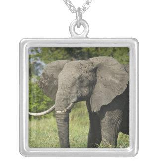 African Elephant, Masai Mara, Kenya. Loxodonta Square Pendant Necklace
