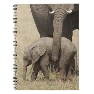 African Elephant mother with baby walking 2 Notebook