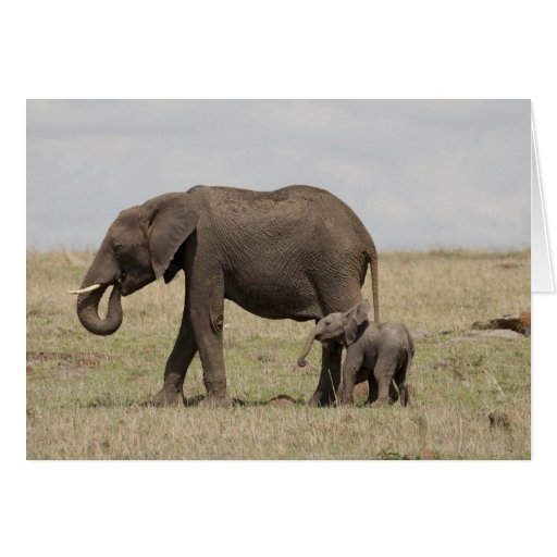 African Elephant mother with baby walking Card