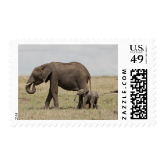 African Elephant mother with baby walking Stamp