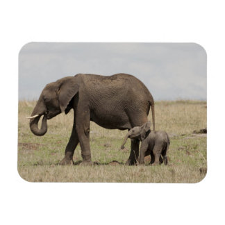 African Elephant mother with baby walking Rectangle Magnet