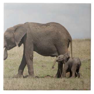 African Elephant mother with baby walking Tile